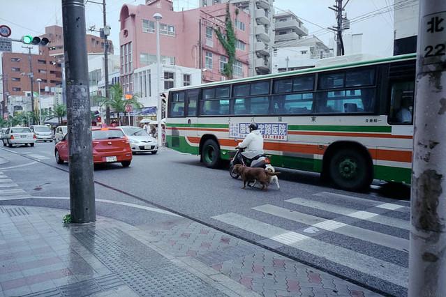 スクーターに乗って犬の散歩 / Dog-walking by motorcycle
