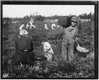 Jim Waldine, 6 years old, been picking cranberries 2 years, September 1910
