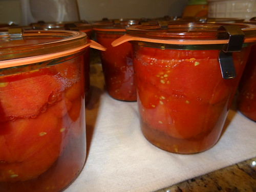 Canning Tomatoes July 2012 (7)