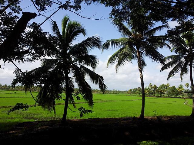Kerala_near Kumarakam