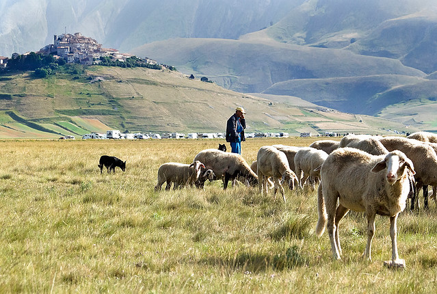 The Shepherd with his Flock-sheep - Il pastore e il suo gregge - Castelluccio di Norcia - Monti Sibillini - Italy