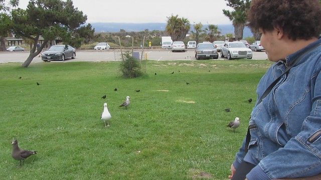 MVI_8242 120716 Goleta Beach gull catches Malika food 11s