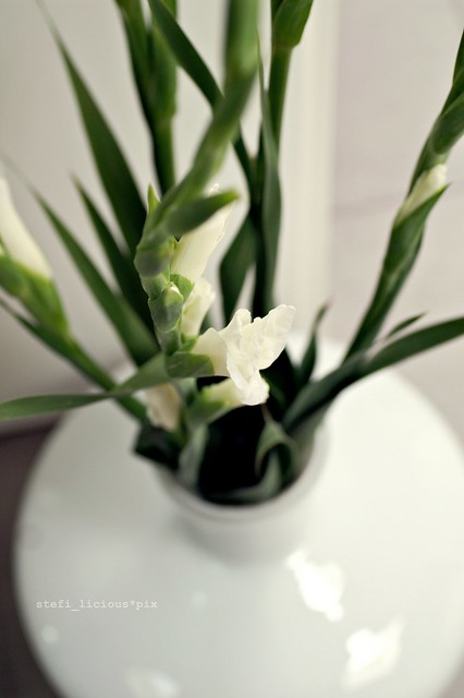 gladiolen_1