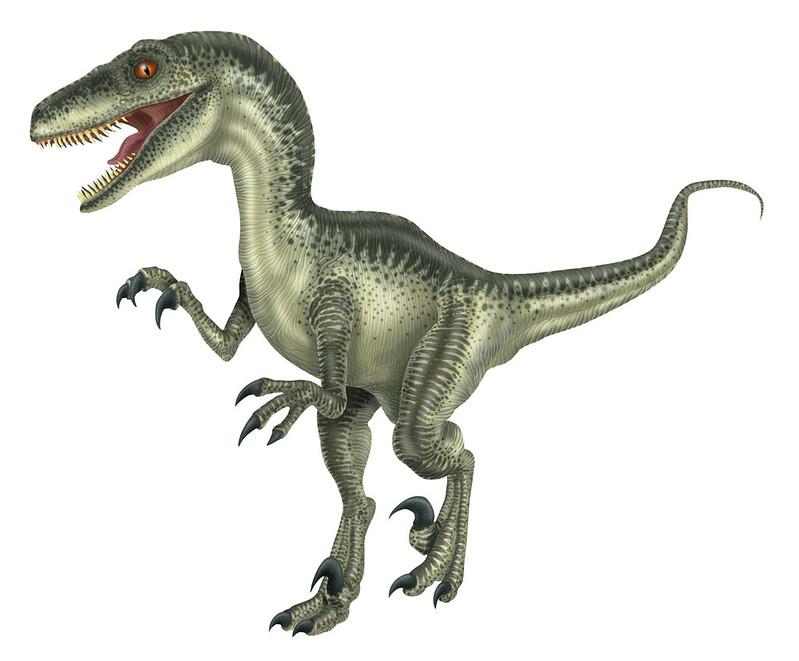 Velociraptor - ilustração (2004)