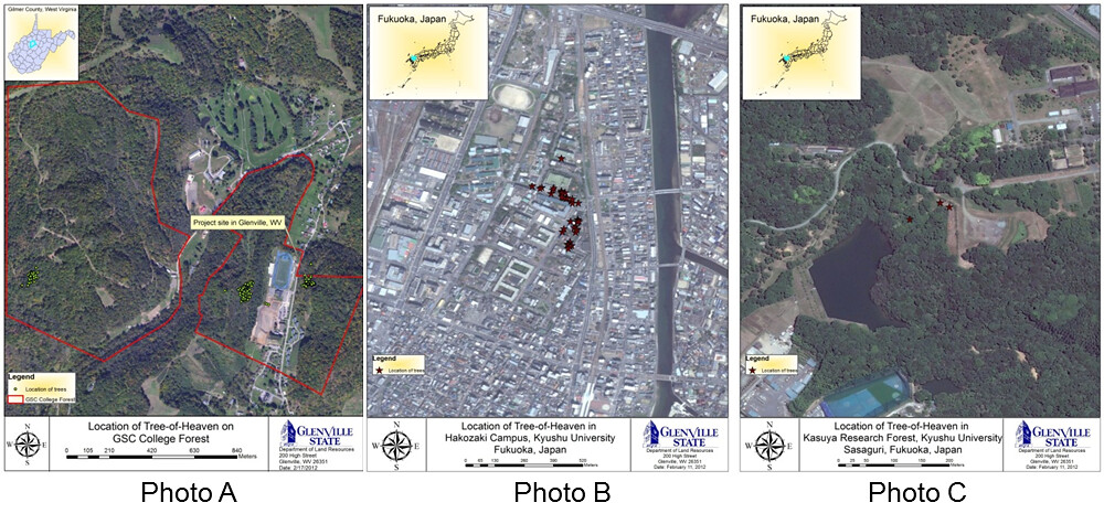 Maps Showing The Location Of Tree Of Heaven In Glenville West Virginia And