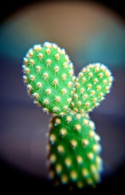 anteketborka.blogspot.com, cactus5