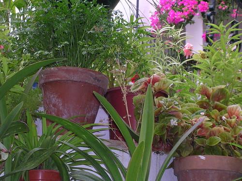 Macetas de Plantas y Flores en La Ermita... En La Janda Litoral