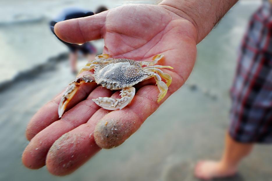 072212_03_beach_handCrab