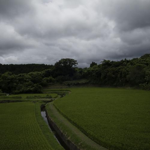 Rice Paddy with Twist, Yorokeikoku, Chiba, Japan