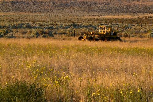 california flowers tractor abandoned field yellow rural america sunrise dawn weeds norcal grader lassencounty