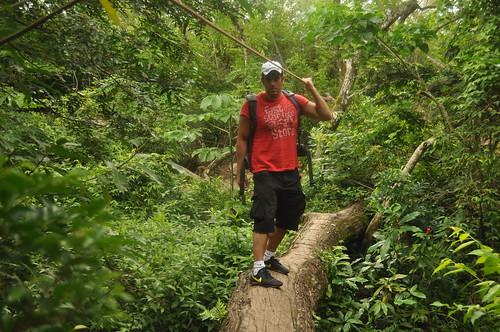 La caminata por los senderos se antoja complicada en muchos tramos, teniendo que sortear zonas muy boscosas, cruzar ríos por encima de troncos y subir por terrenos inestables, ... pero ... ¡¡ ésto es Costa Rica amigos !! [object object] - 7748602480 1daaebfe80 - Rincón de la Vieja, la columna vertebral de américa central