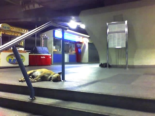 feral dog in Bangkok subway (by: niftyc, creative commons)