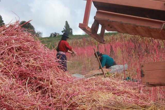 Photo:Gure familia quinua biltzen By:Uxue HegoAmerikan