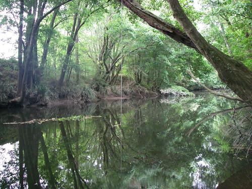 Lansdowne River at Warrens Lane, Lansdowne NSW