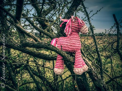 Pink ragdoll horse