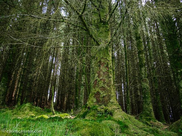 Bosque de Cruach Tarbeirt
