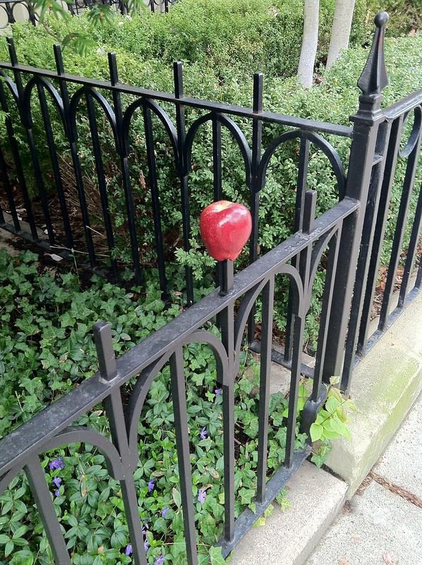 Apple on fence