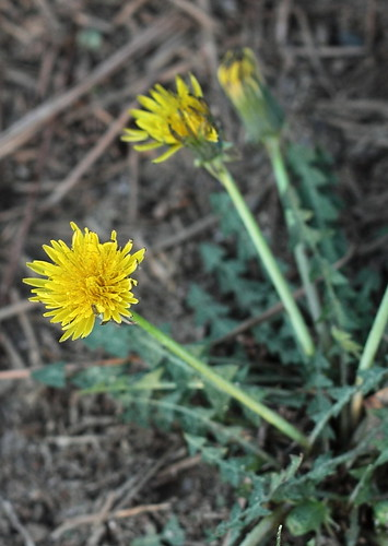 Pollen_2012_10