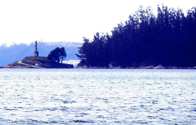 �rboles gigantes en la isla de Tambo