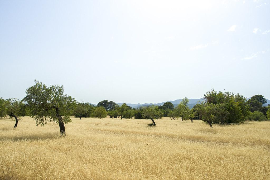 Sóller - Mallorca