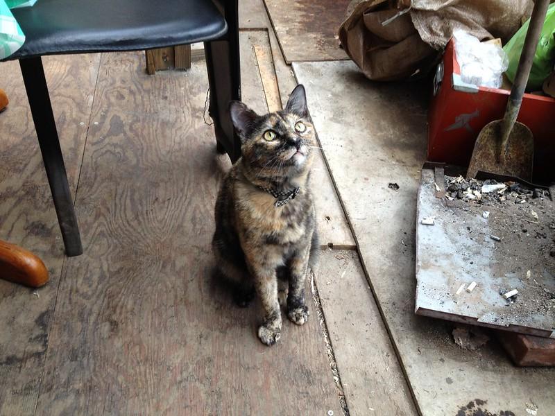 ライダーハウスやまだの猫