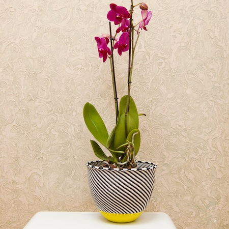 The South is Blooming ZZL plant holder-4