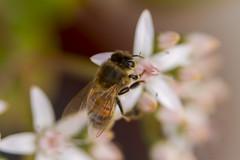 Bee_9