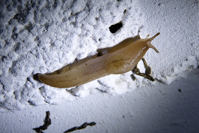 27588 - Unidentified Slug