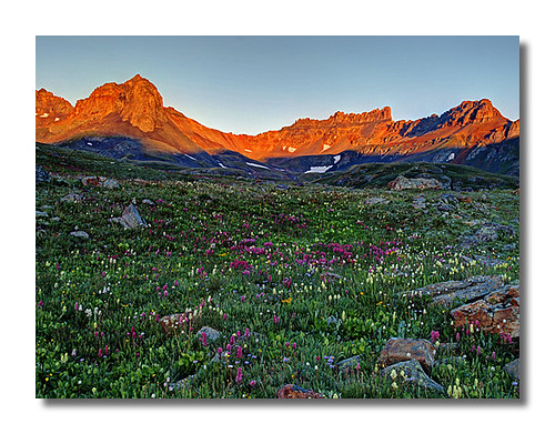 Wildflowers in Ice Lakes Basin