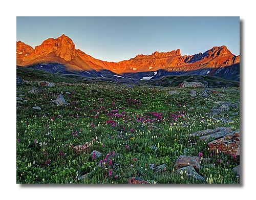 Wildflowers in Ice Lakes Basin