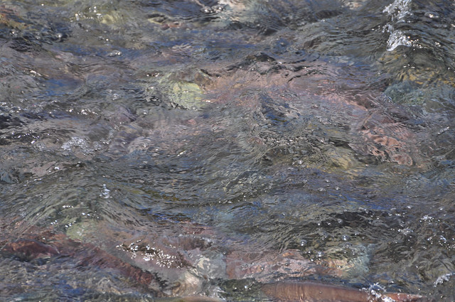 Thousands of them (salmon) waiting for the jump [Katmai National Park]