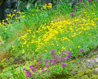 Christine Falls Wildflowers