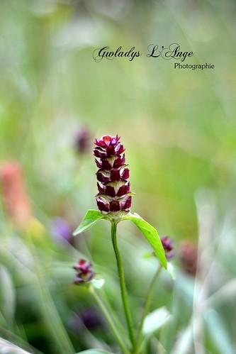 Envolée florale