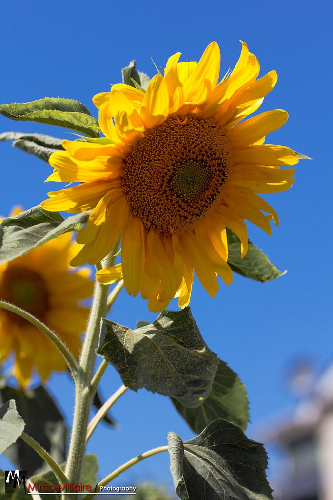 IMAGE: http://farm8.staticflickr.com/7137/7810808688_f0bfe1f933_b.jpg