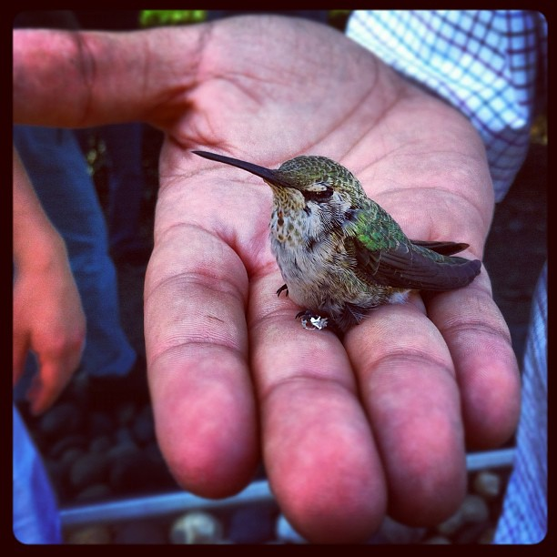 Header of A Bird in the Hand