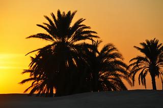 Tunisia-3755 - Tunisian Sunrise