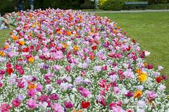 Bruge flower Bed