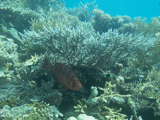 Hurghada 3-5-2016