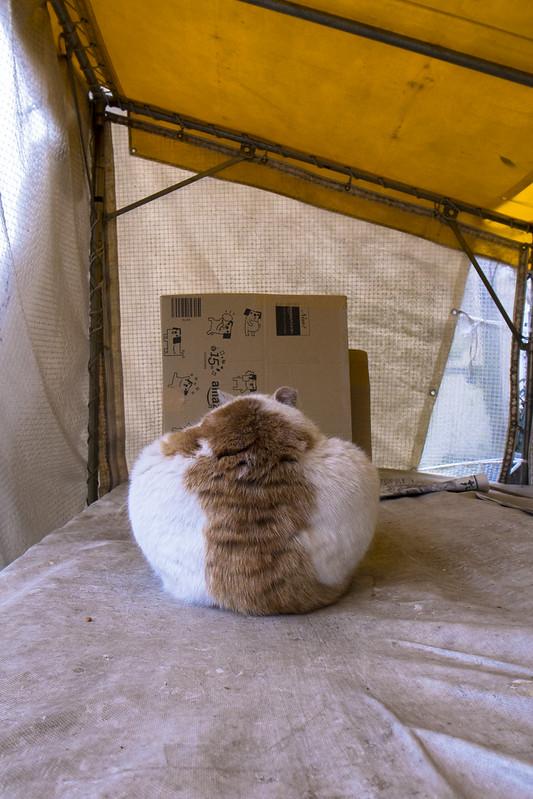 お猫さま-20160302-2