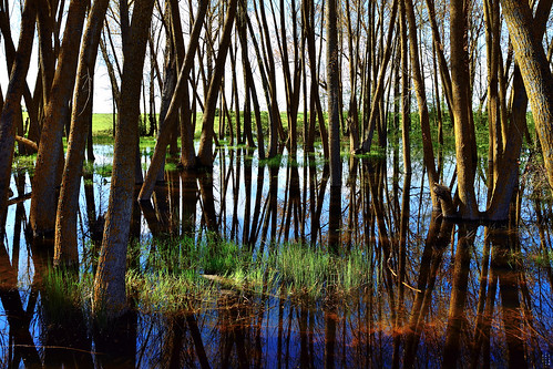 Backlight, Grass, Wetland, Campos branch, The Canal of Castile, Valladolid, Spain