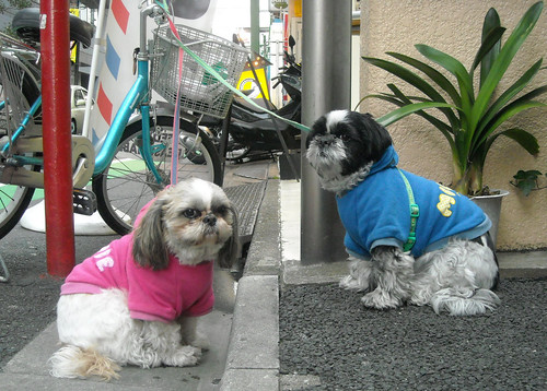 Japanese Pets - small dogs