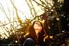 Golden leaves by FRANCK MORDECAI