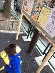 掲示板を見上げるとらちゃん(2012/4/8)