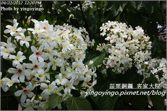 苗栗銅鑼_客家大院20120422_I328