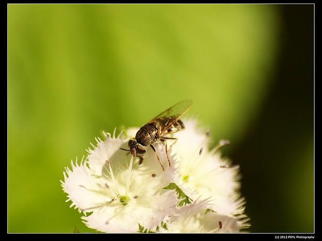 2012-04-17-P4170656_nEO_IMG