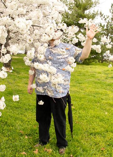 CherryBlossomGneech.jpg