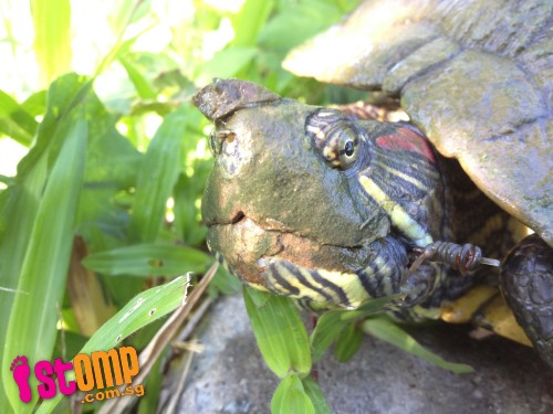Angler who injured turtle with fish hook should be shamed