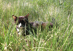 Cat relaxes in the grass