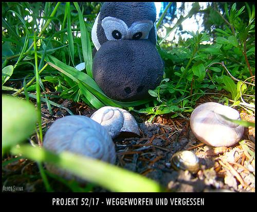 Projekt 52/17 - Weggeworfen und vergessen