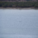 Dolphins - Port Augusta, South Australia